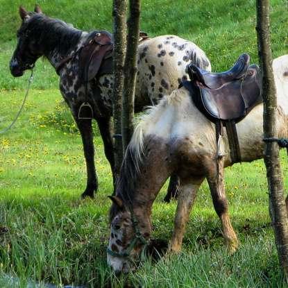 paardrijden in de dordogne